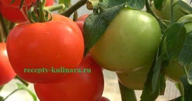 Когда и как сажать помидоры на рассаду по лунному календарю 2018 года