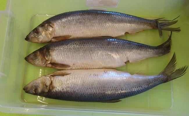 Как посолить рыбу селедку в домашних условиях